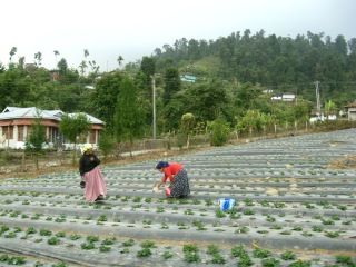 Samsing Garden
