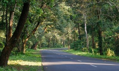 Way to Chapramari Wildlife Sanctuary