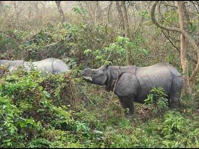 Animals in Chapramari Wildlife Sanctuary
